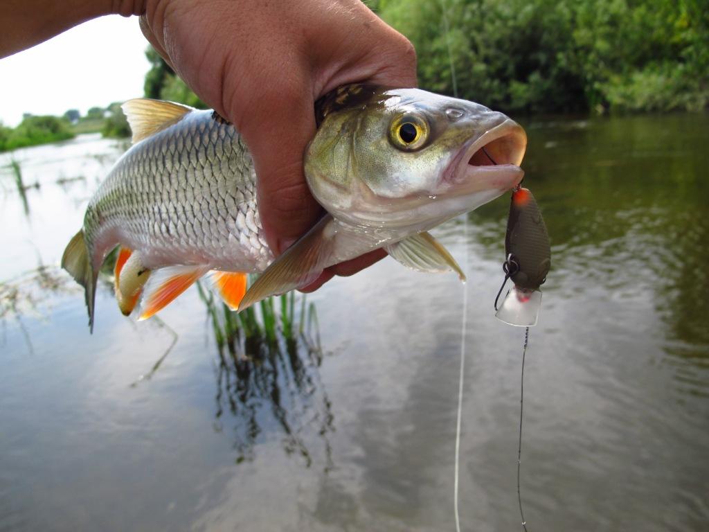 рыбалка на цне рязань
